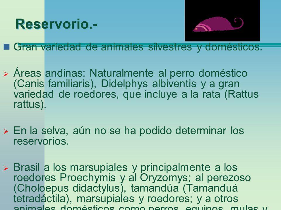 Reservorio.- Gran variedad de animales silvestres y domésticos.