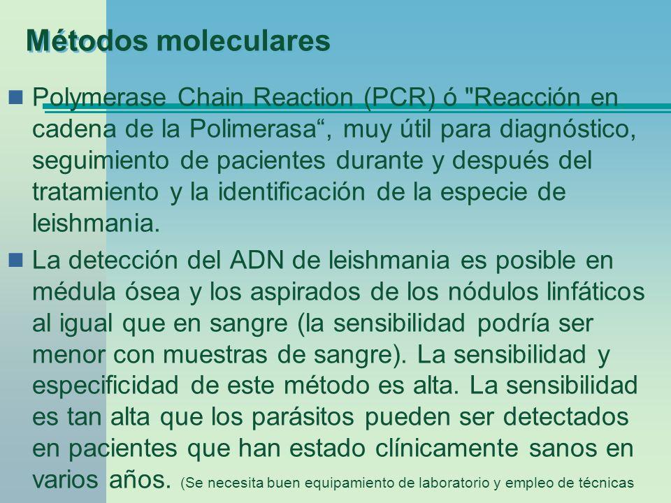 Métodos moleculares