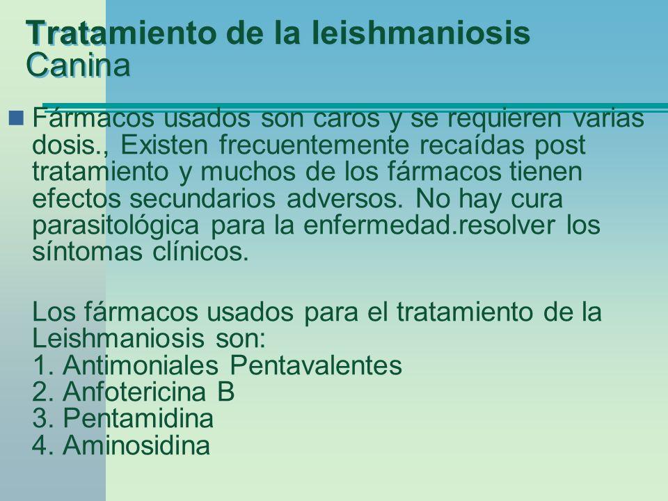 Tratamiento de la leishmaniosis Canina