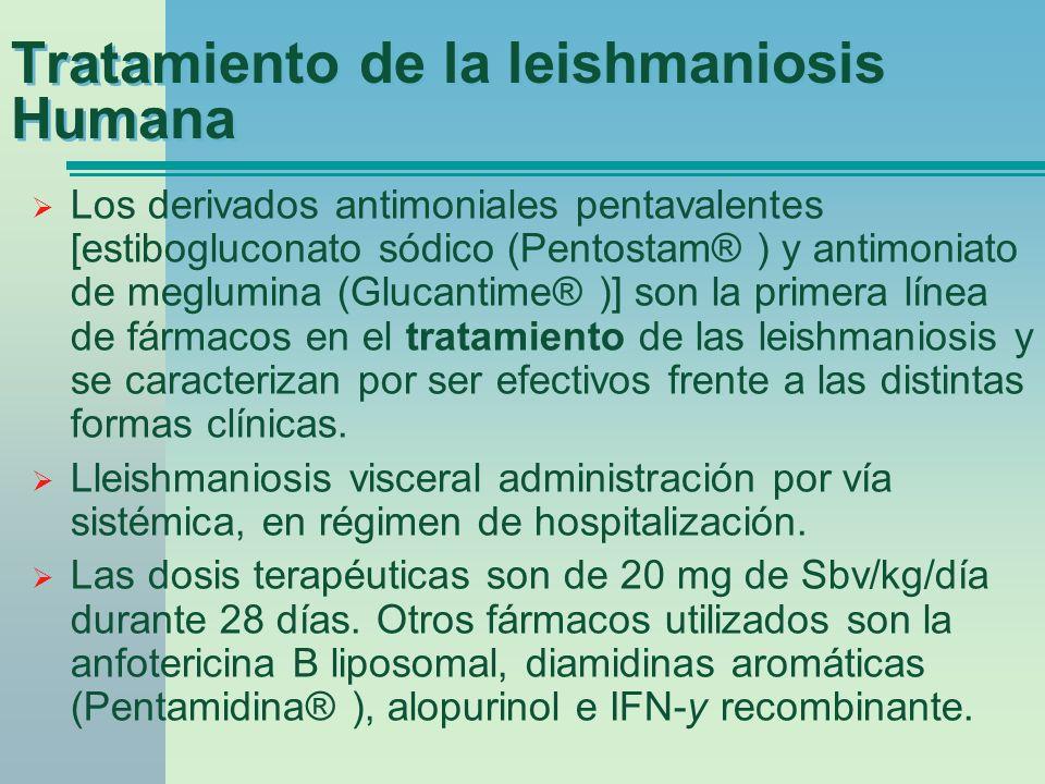 Tratamiento de la leishmaniosis Humana