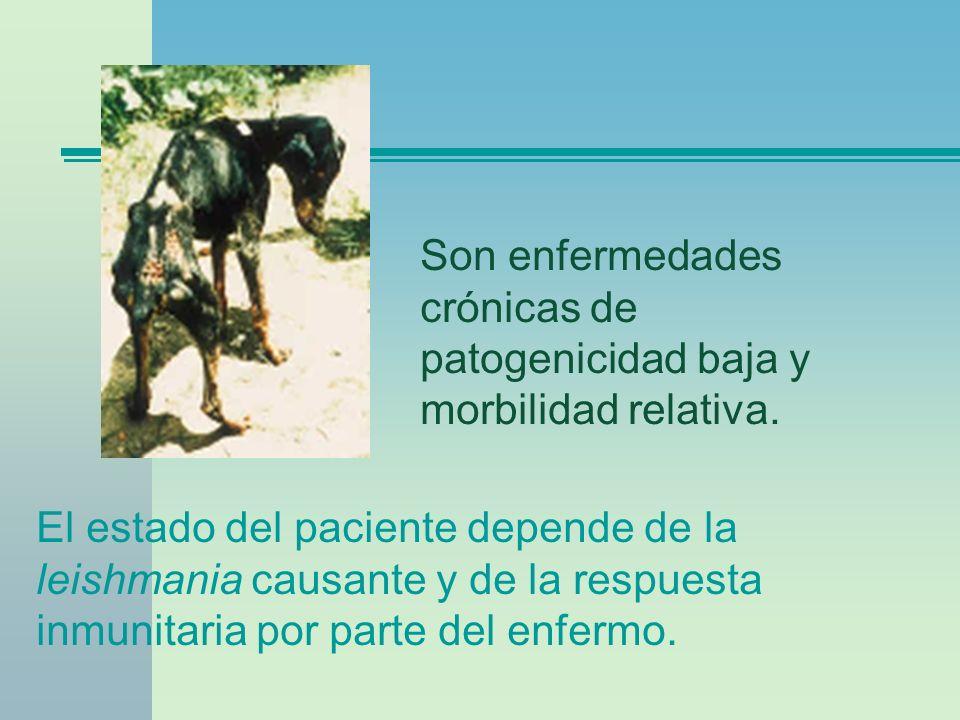 Son enfermedades crónicas de patogenicidad baja y morbilidad relativa.