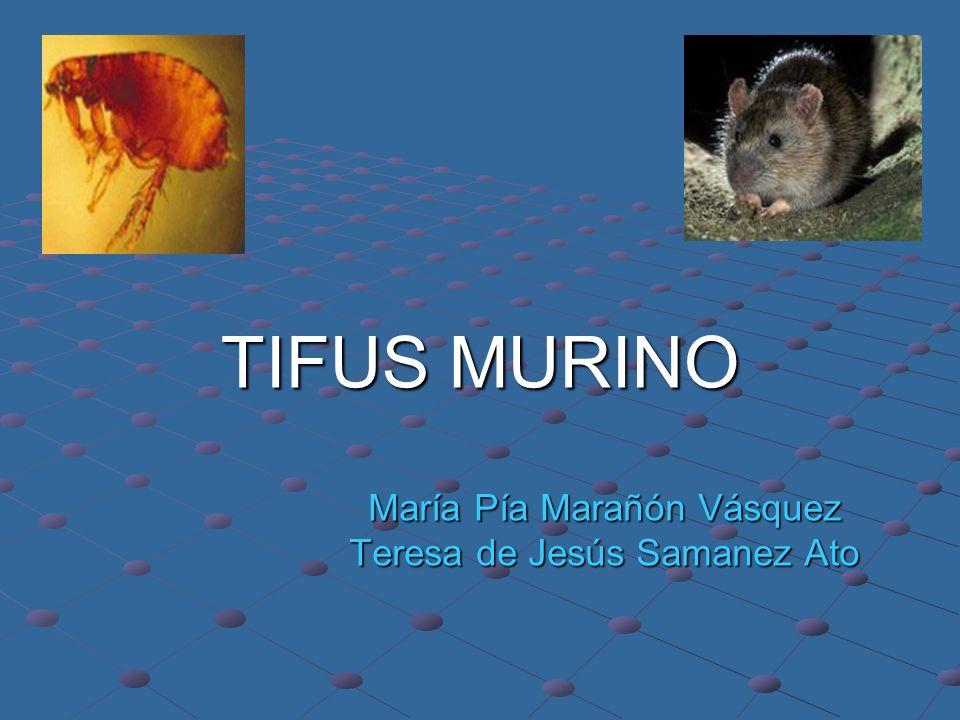 María Pía Marañón Vásquez Teresa de Jesús Samanez Ato