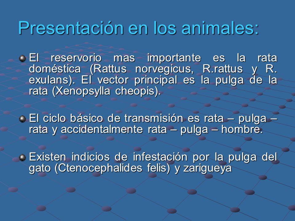 Presentación en los animales: