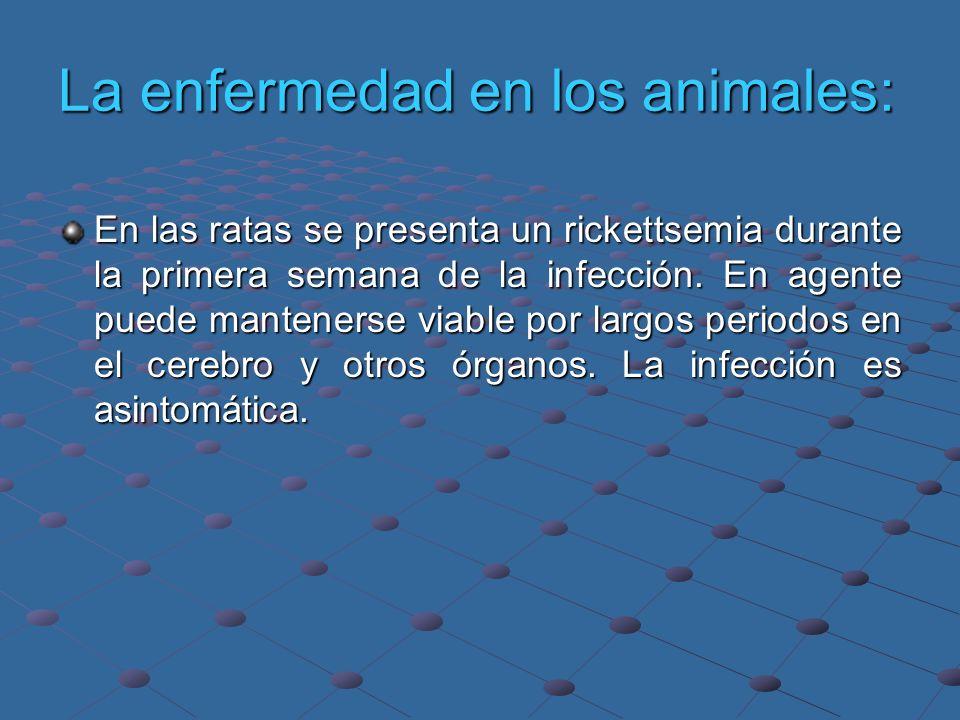 La enfermedad en los animales: