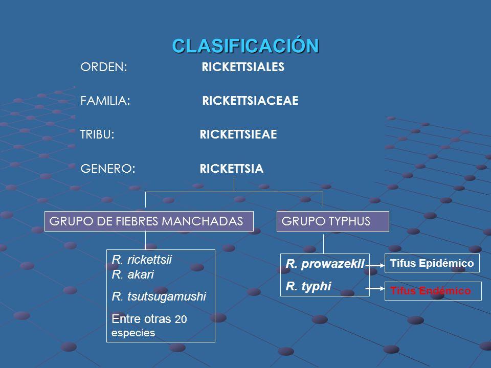 CLASIFICACIÓN ORDEN: RICKETTSIALES FAMILIA: RICKETTSIACEAE