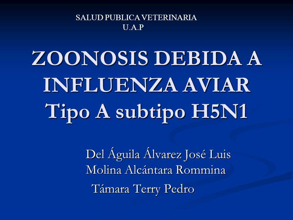 ZOONOSIS DEBIDA A INFLUENZA AVIAR Tipo A subtipo H5N1