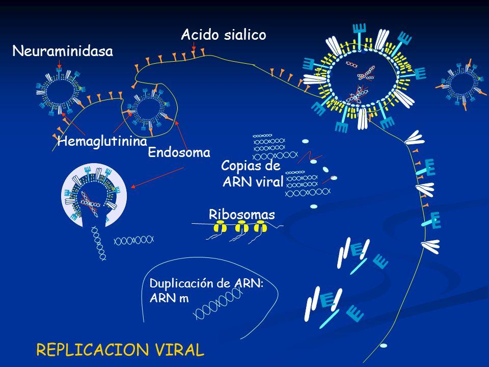 REPLICACION VIRAL Acido sialico Neuraminidasa Hemaglutinina Endosoma