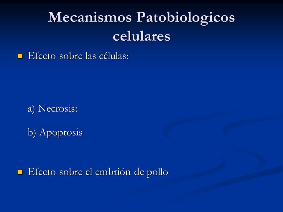 Mecanismos Patobiologicos celulares