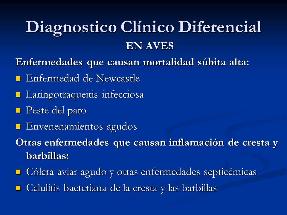 Diagnostico Clínico Diferencial