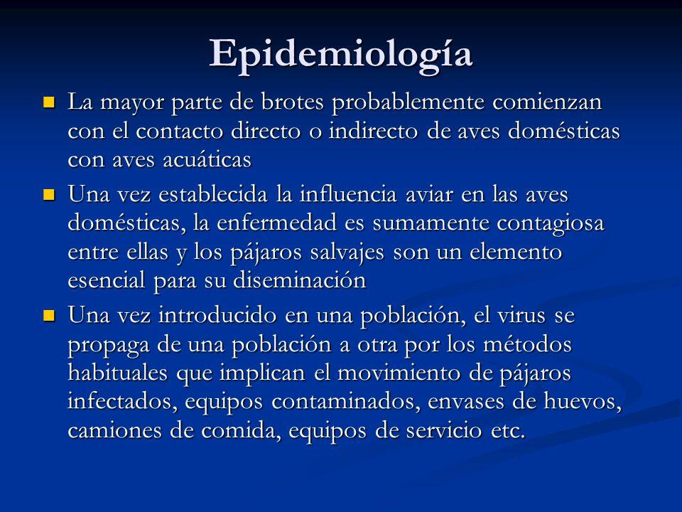 Epidemiología La mayor parte de brotes probablemente comienzan con el contacto directo o indirecto de aves domésticas con aves acuáticas.