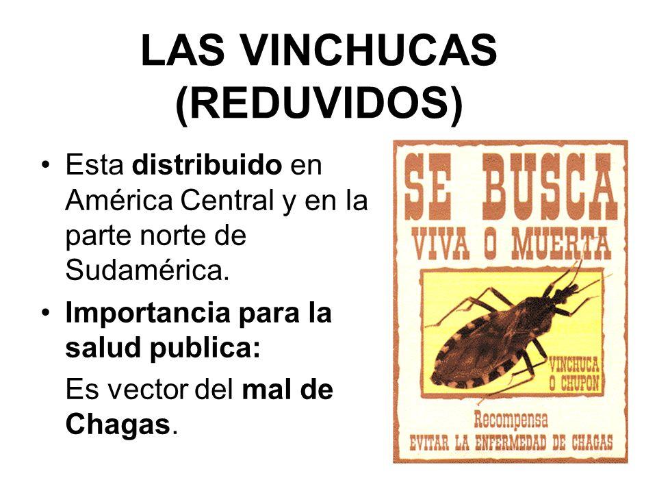 LAS VINCHUCAS (REDUVIDOS)