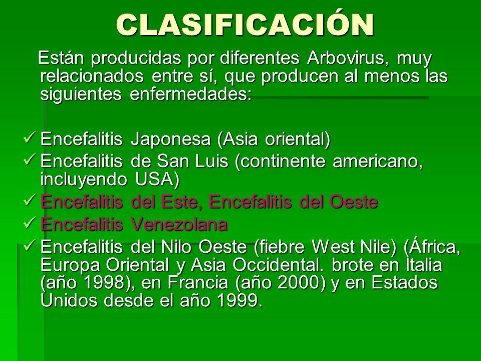 CLASIFICACIÓN Están producidas por diferentes Arbovirus, muy relacionados entre sí, que producen al menos las siguientes enfermedades: