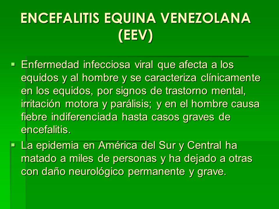 ENCEFALITIS EQUINA VENEZOLANA (EEV)