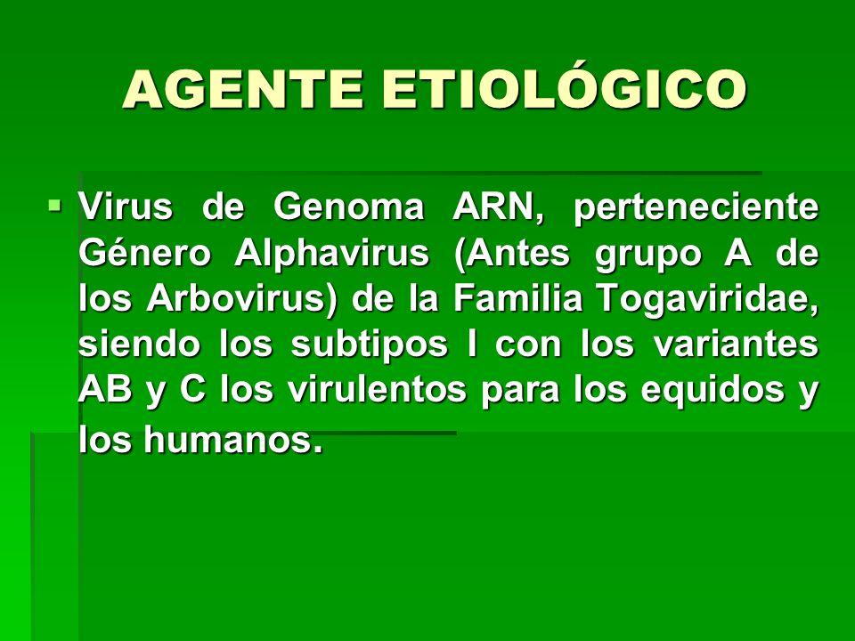 AGENTE ETIOLÓGICO