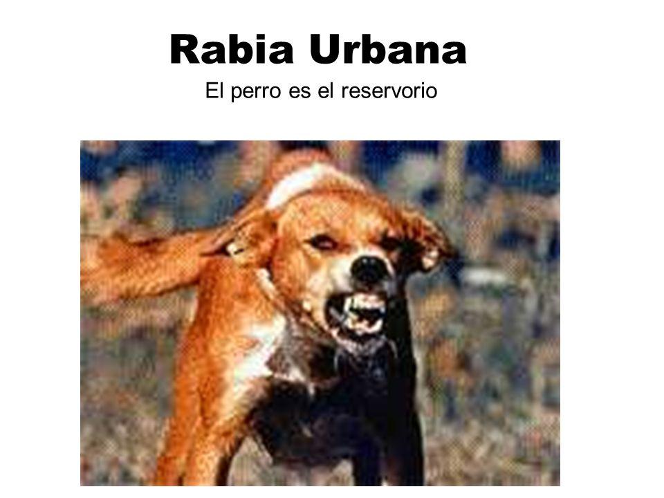 El perro es el reservorio