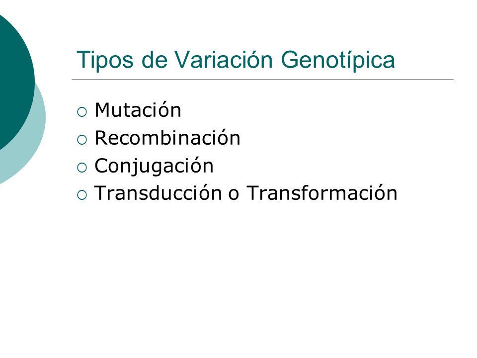 Tipos de Variación Genotípica