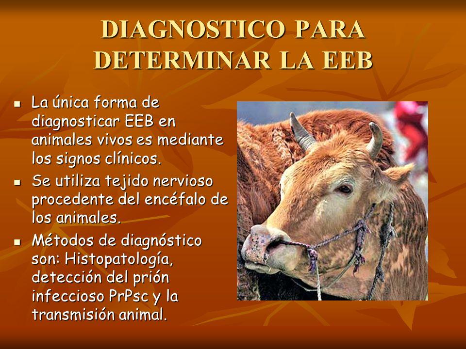 DIAGNOSTICO PARA DETERMINAR LA EEB