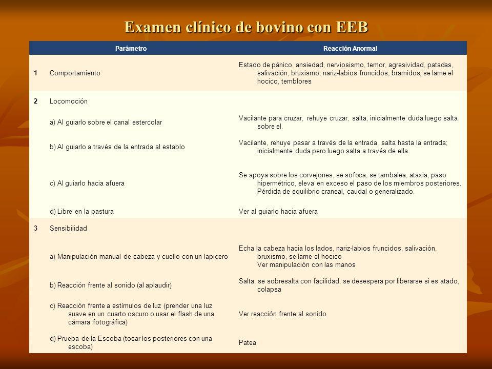 Examen clínico de bovino con EEB