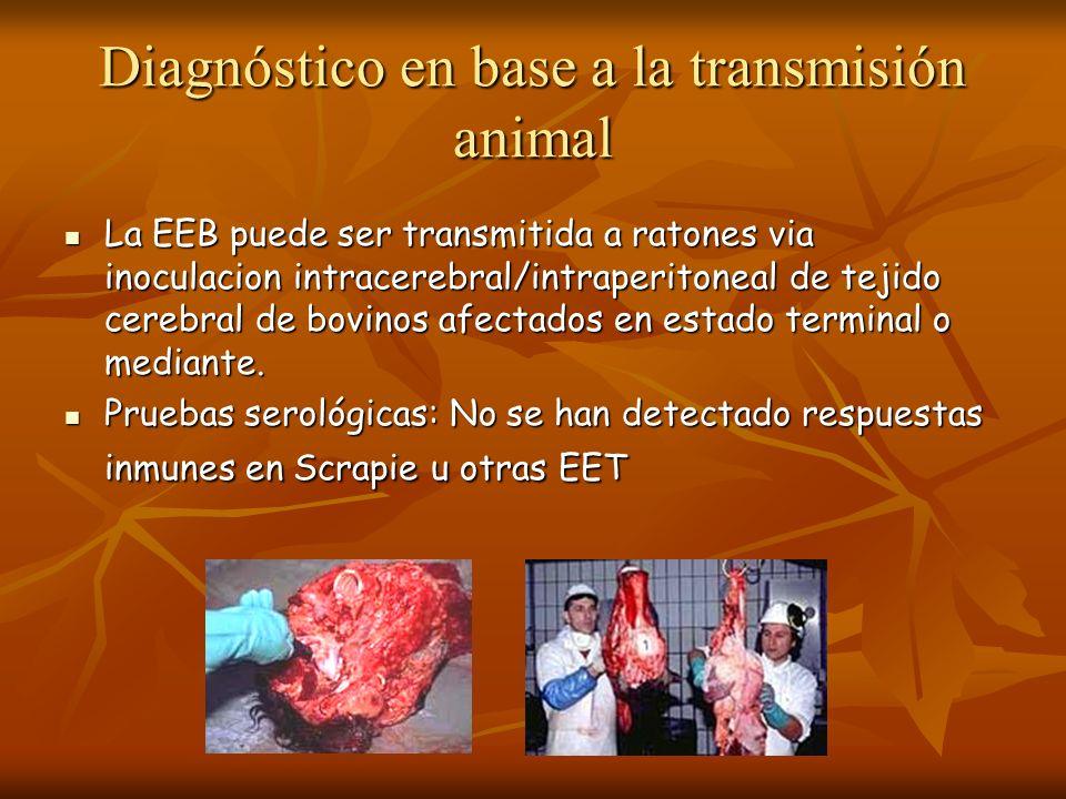 Diagnóstico en base a la transmisión animal