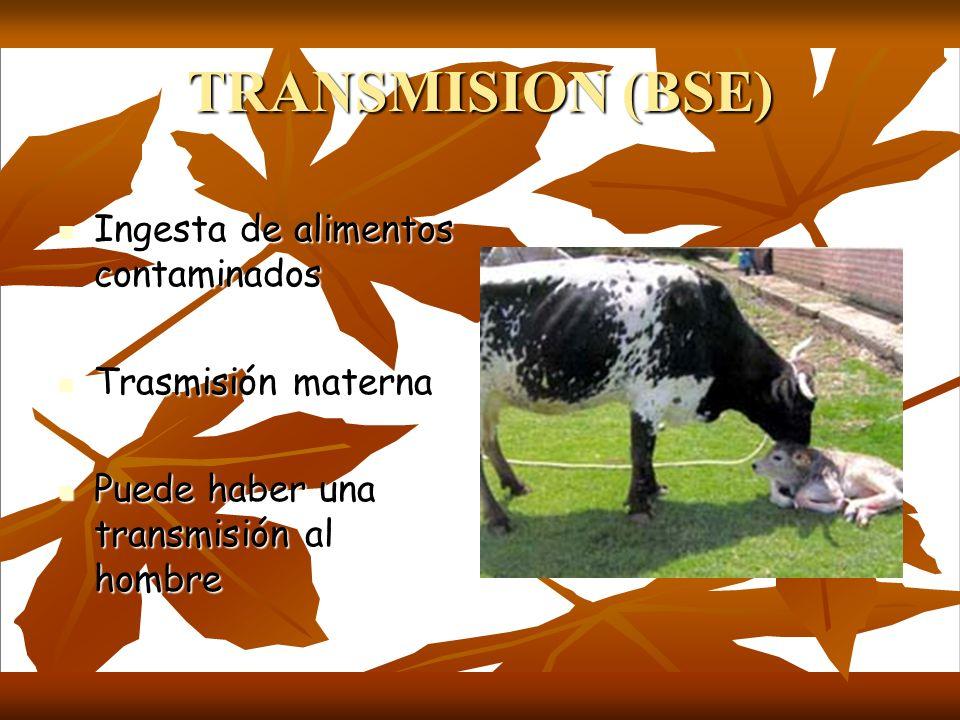 TRANSMISION (BSE) Ingesta de alimentos contaminados Trasmisión materna