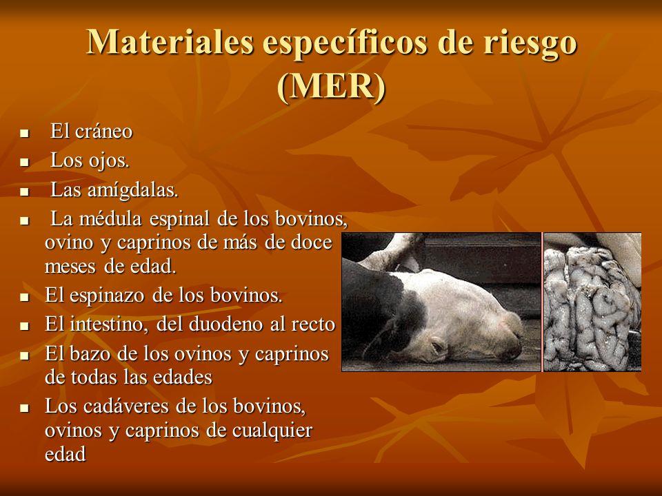 Materiales específicos de riesgo (MER)