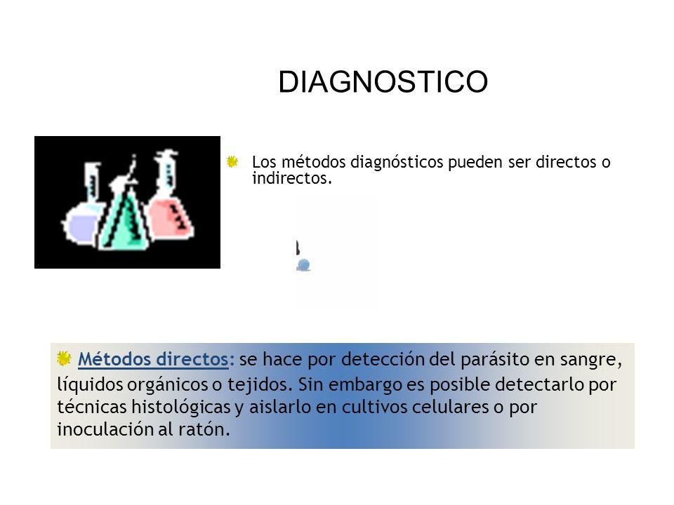 DIAGNOSTICO Los métodos diagnósticos pueden ser directos o indirectos.