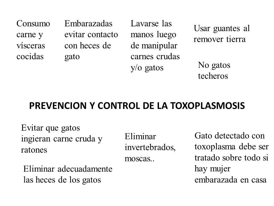 PREVENCION Y CONTROL DE LA TOXOPLASMOSIS
