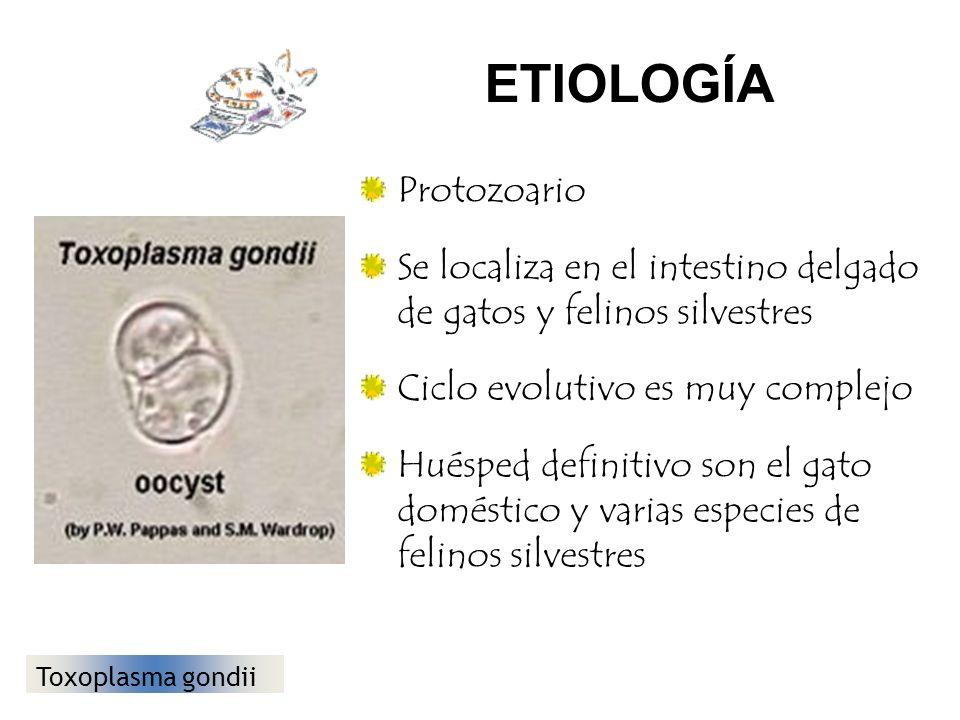 ETIOLOGÍA Protozoario