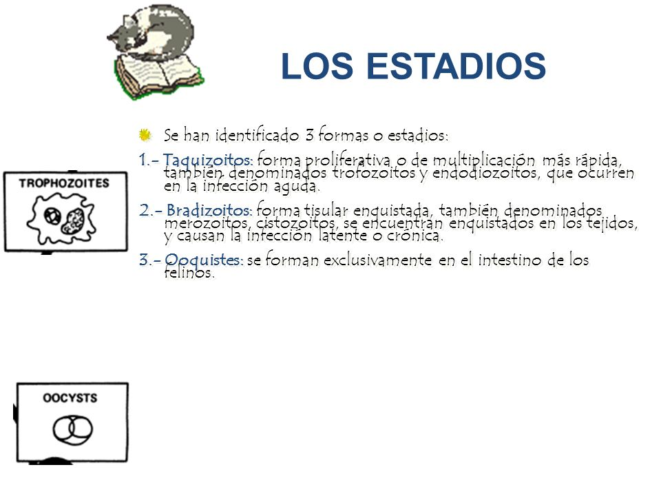 LOS ESTADIOS Se han identificado 3 formas o estadios: