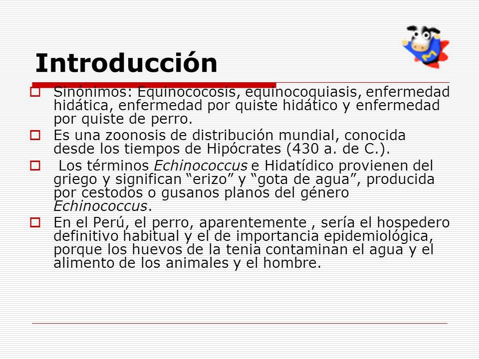 Introducción Sinónimos: Equinococosis, equinocoquiasis, enfermedad hidática, enfermedad por quiste hidático y enfermedad por quiste de perro.