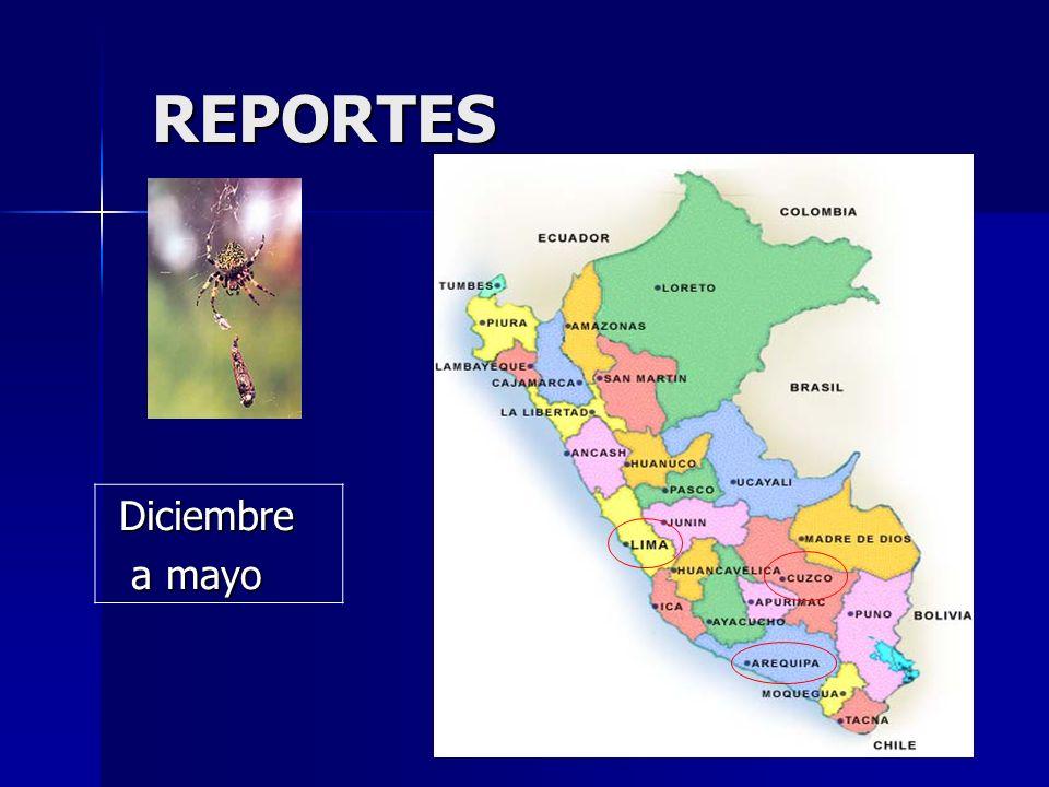 REPORTES Diciembre a mayo