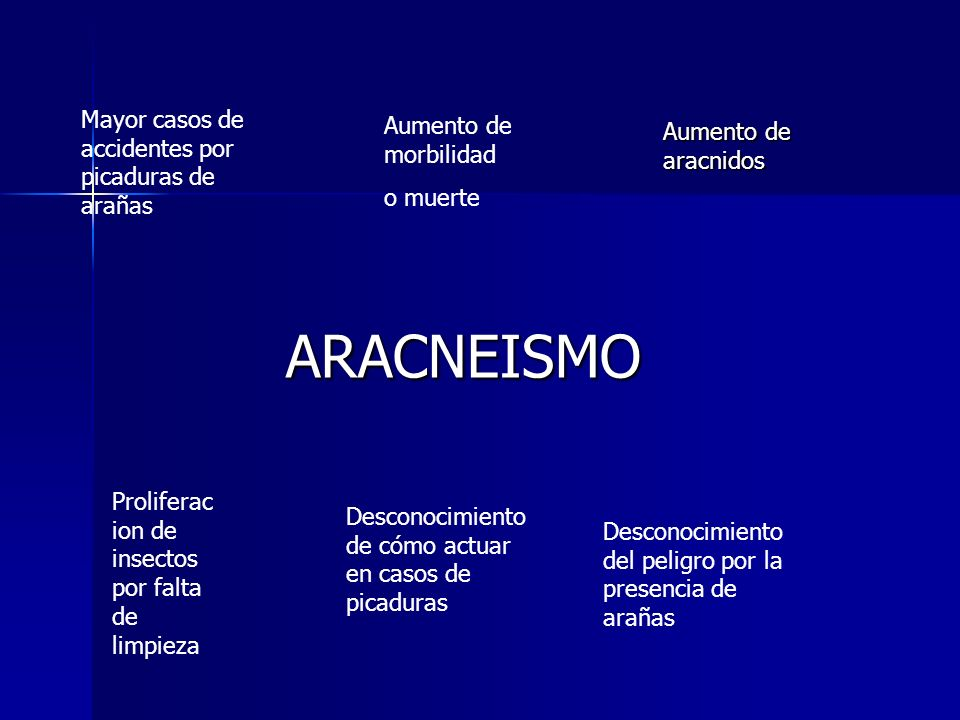 ARACNEISMO Mayor casos de accidentes por picaduras de arañas