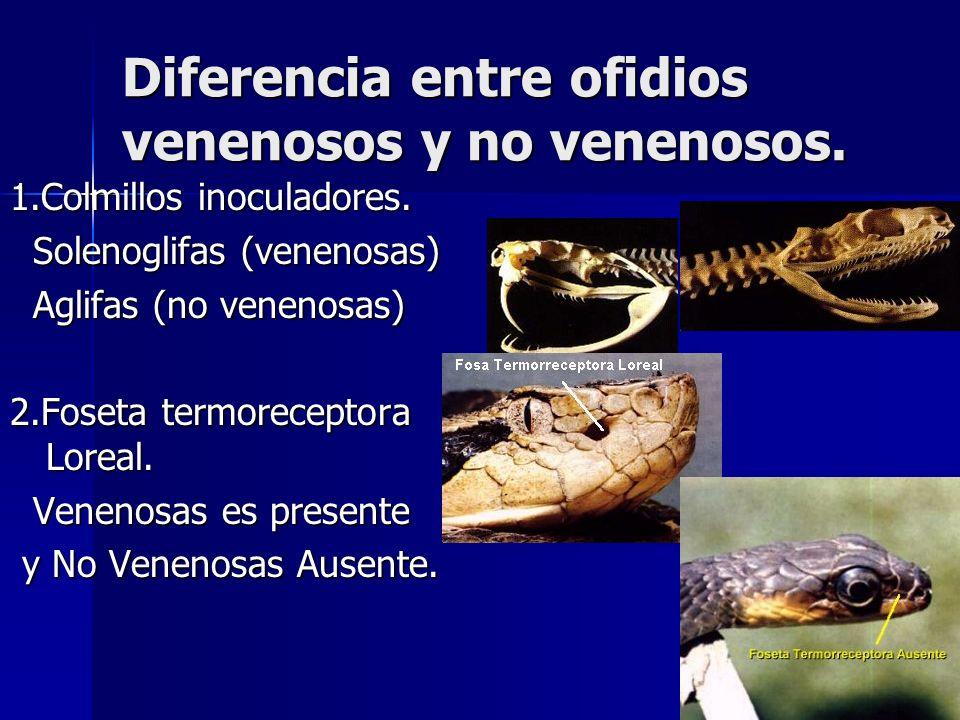 Diferencia entre ofidios venenosos y no venenosos.