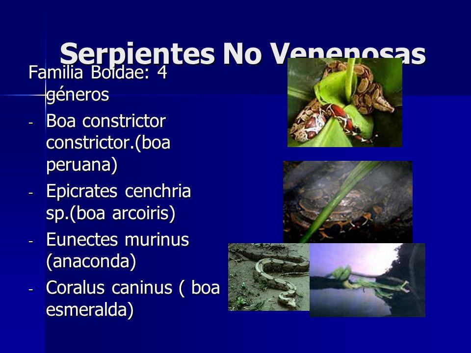 Serpientes No Venenosas