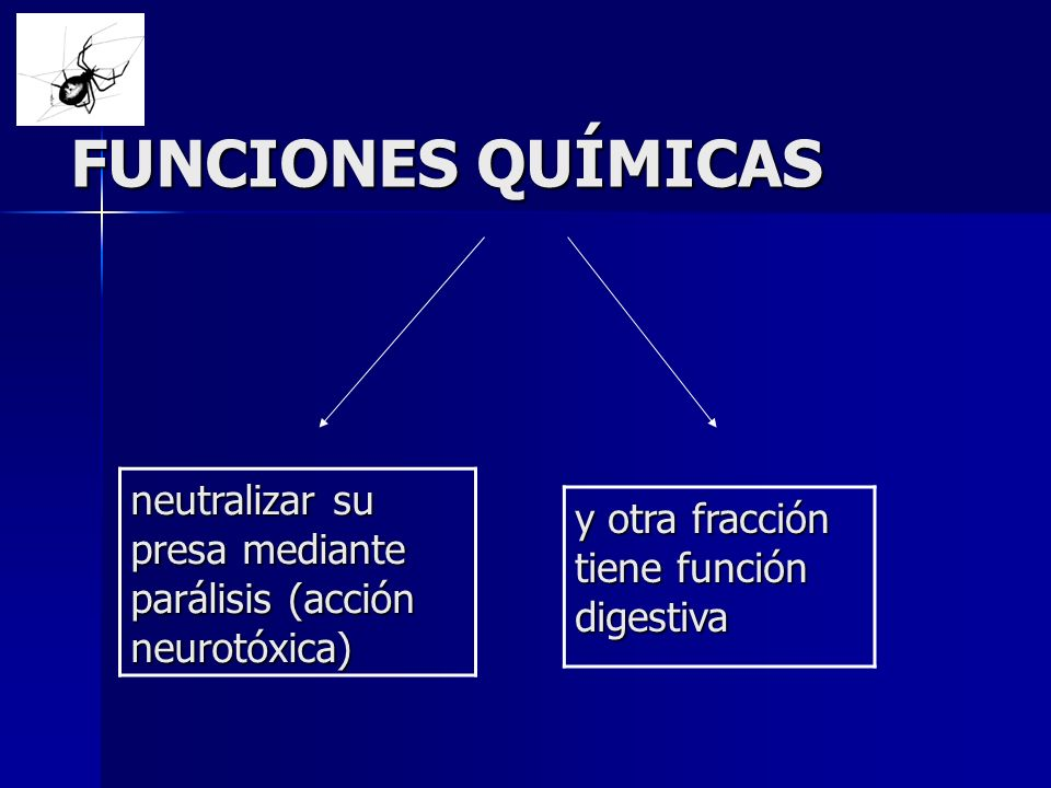FUNCIONES QUÍMICAS neutralizar su presa mediante parálisis (acción neurotóxica) y otra fracción tiene función digestiva.