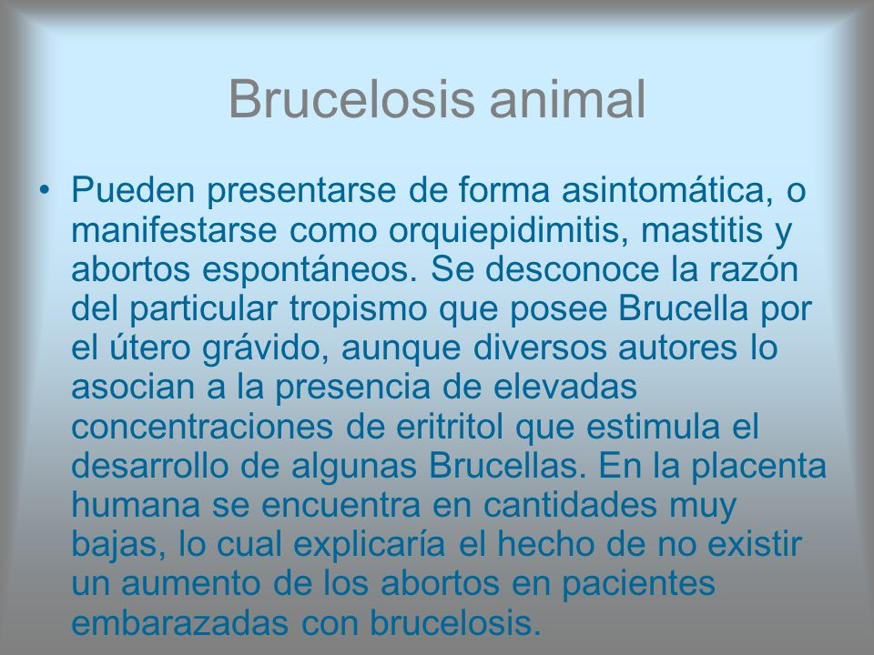 Brucelosis animal