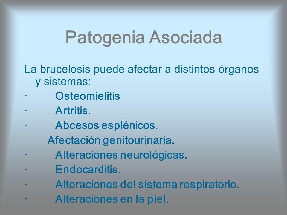 Patogenia Asociada La brucelosis puede afectar a distintos órganos y sistemas: · Osteomielitis.
