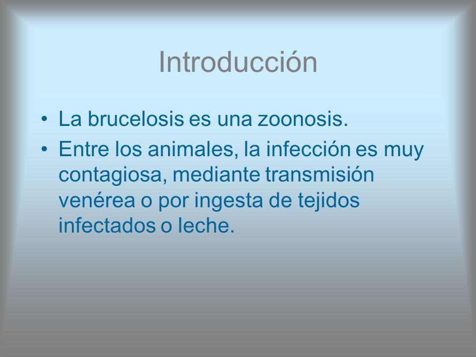 Introducción La brucelosis es una zoonosis.