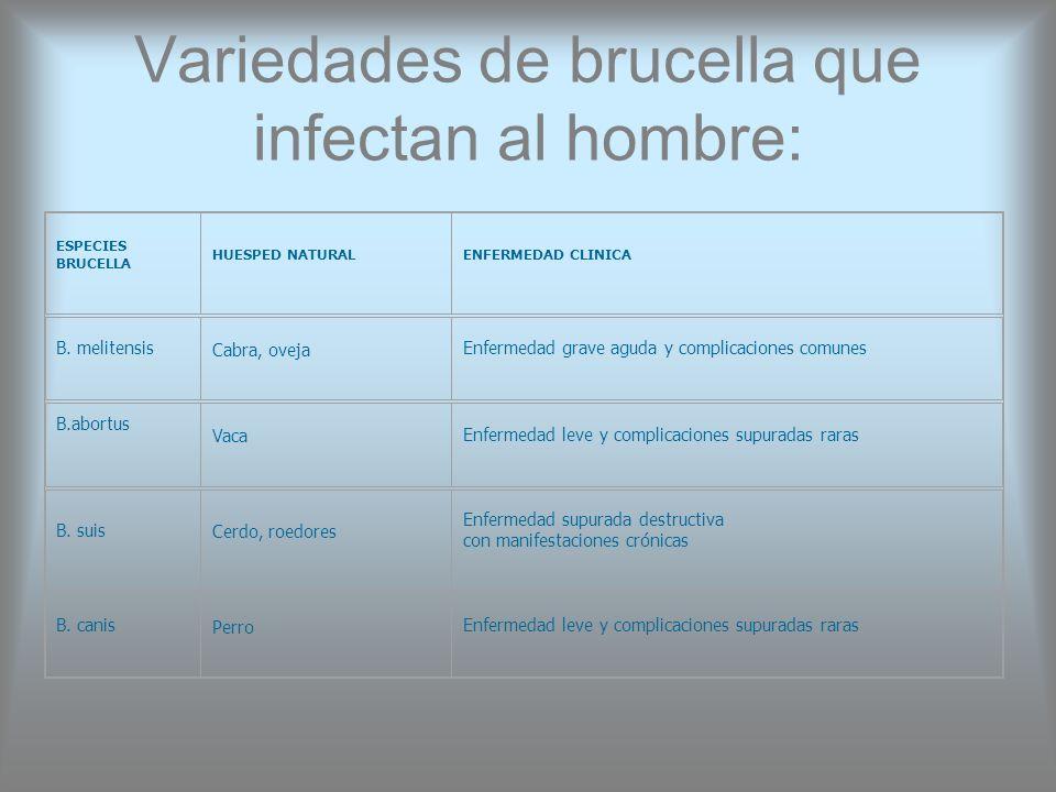Variedades de brucella que infectan al hombre: