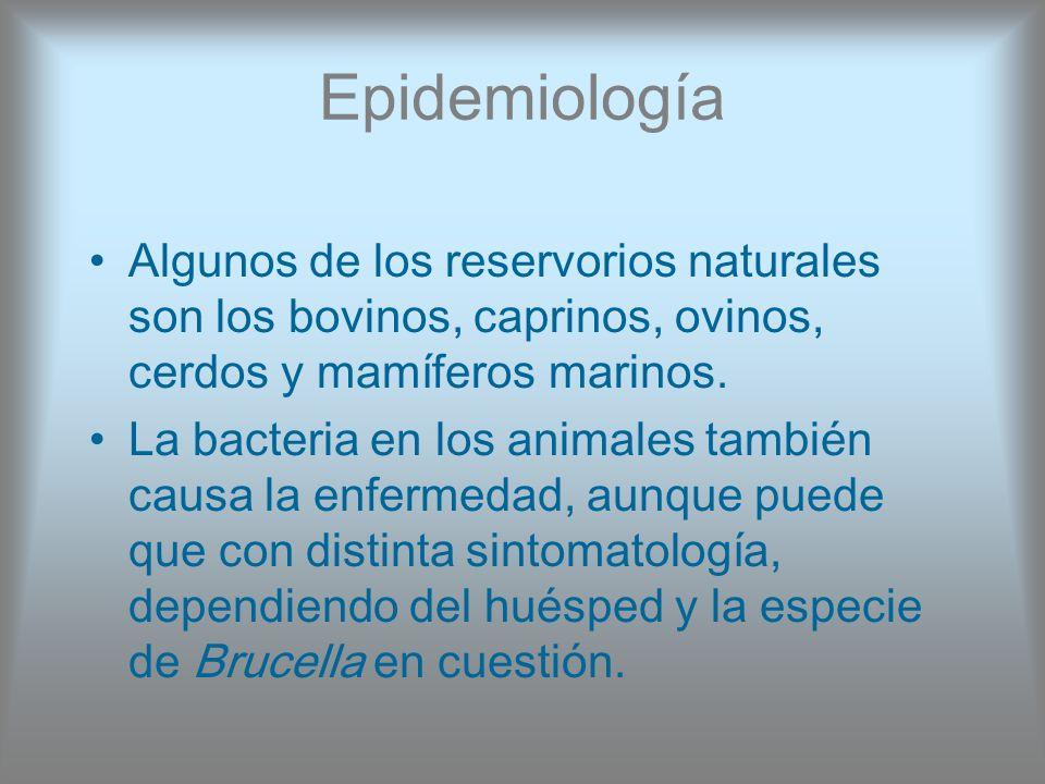 Epidemiología Algunos de los reservorios naturales son los bovinos, caprinos, ovinos, cerdos y mamíferos marinos.
