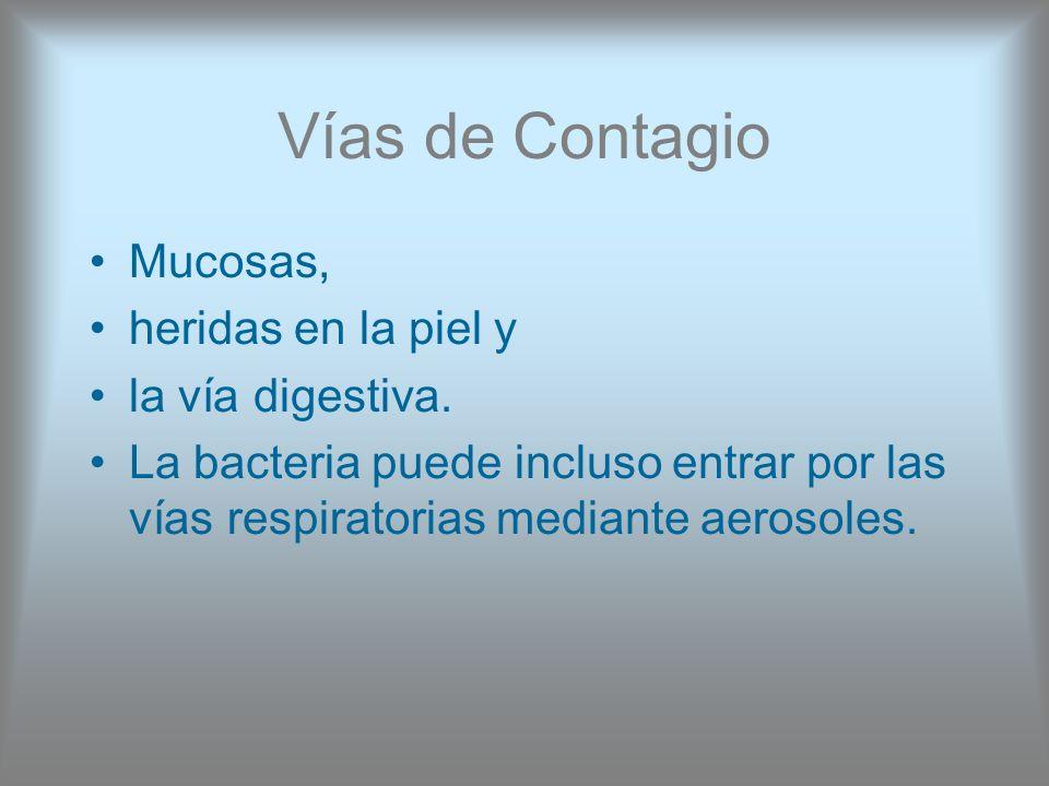 Vías de Contagio Mucosas, heridas en la piel y la vía digestiva.