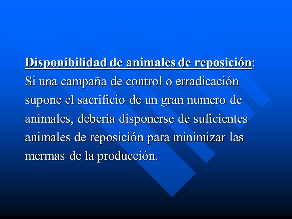 Disponibilidad de animales de reposición: