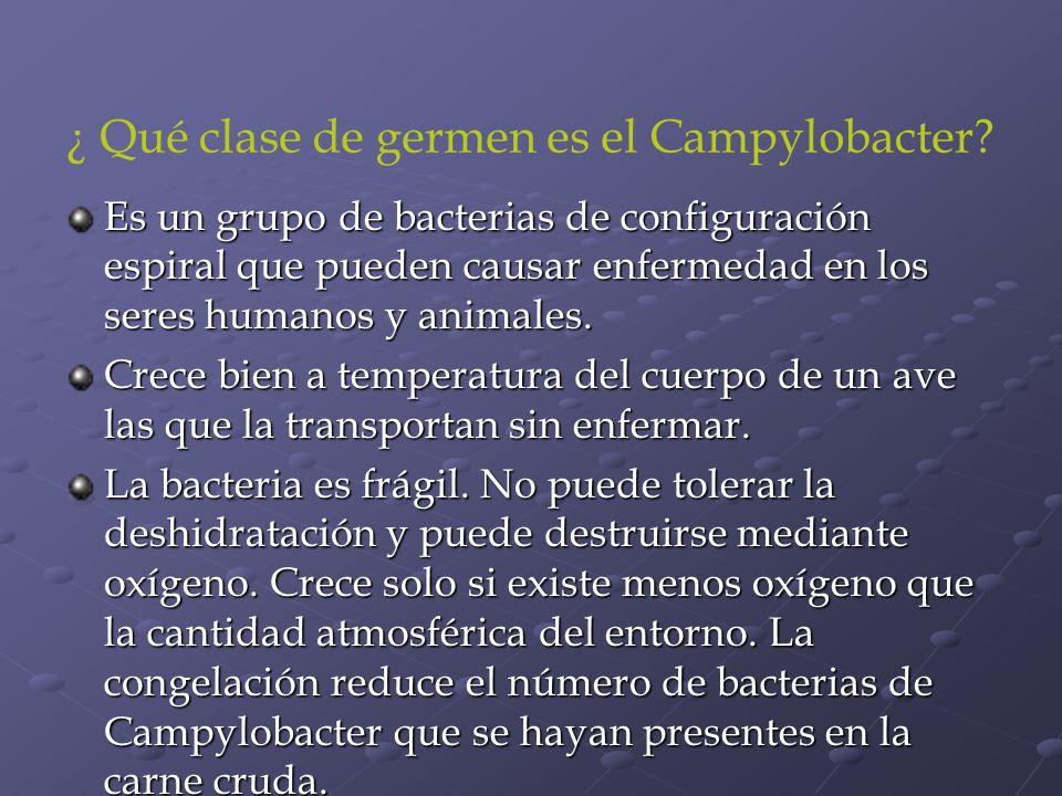 ¿ Qué clase de germen es el Campylobacter