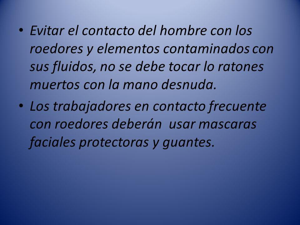 Evitar el contacto del hombre con los roedores y elementos contaminados con sus fluidos, no se debe tocar lo ratones muertos con la mano desnuda.