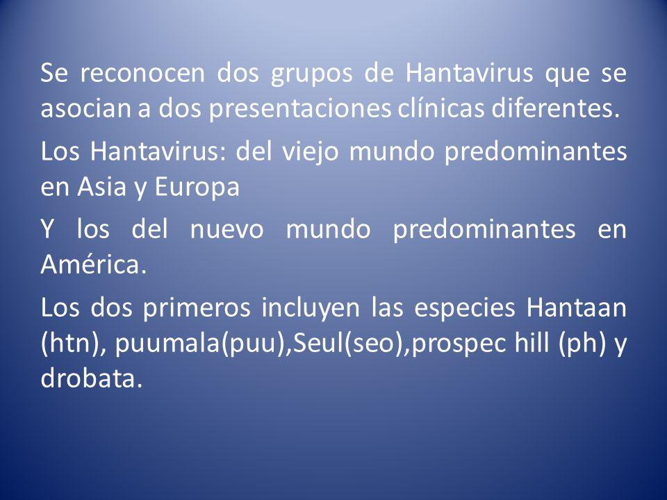 Se reconocen dos grupos de Hantavirus que se asocian a dos presentaciones clínicas diferentes.