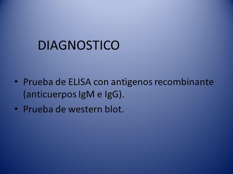 DIAGNOSTICO Prueba de ELISA con antìgenos recombinante (anticuerpos IgM e IgG).
