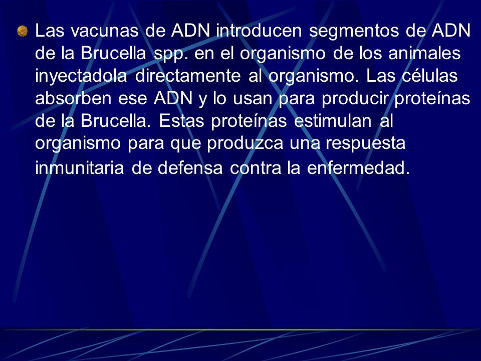 Las vacunas de ADN introducen segmentos de ADN de la Brucella spp