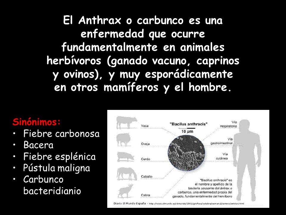 El Anthrax o carbunco es una enfermedad que ocurre fundamentalmente en animales herbívoros (ganado vacuno, caprinos y ovinos), y muy esporádicamente en otros mamíferos y el hombre.