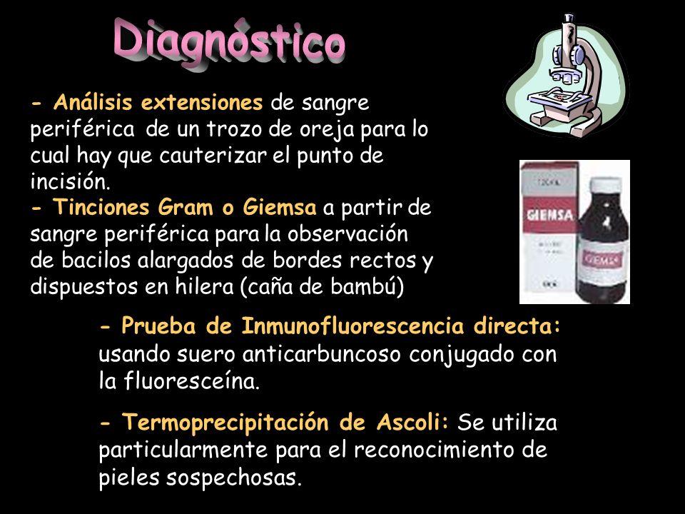 Diagnóstico - Análisis extensiones de sangre periférica de un trozo de oreja para lo cual hay que cauterizar el punto de incisión.