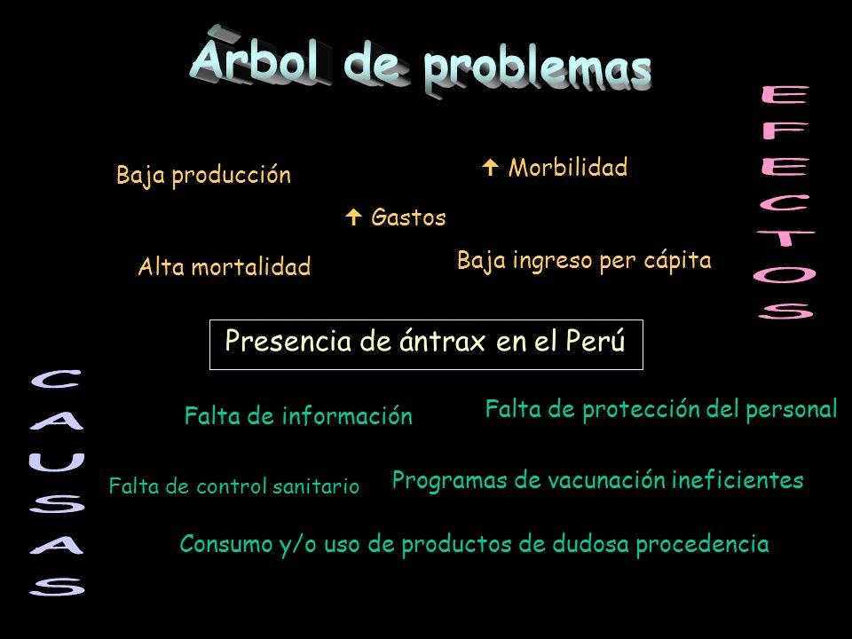 Árbol de problemas EFECTOS CAUSAS Presencia de ántrax en el Perú